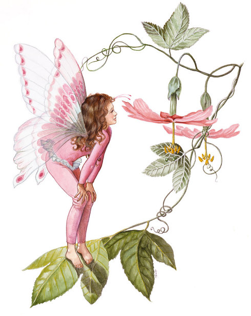 Rosie The Fairy