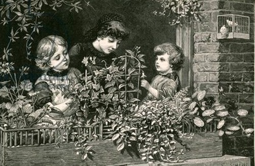 Recreations Of The London Poor - Window Gardening For Children