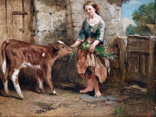Feeding The Calf