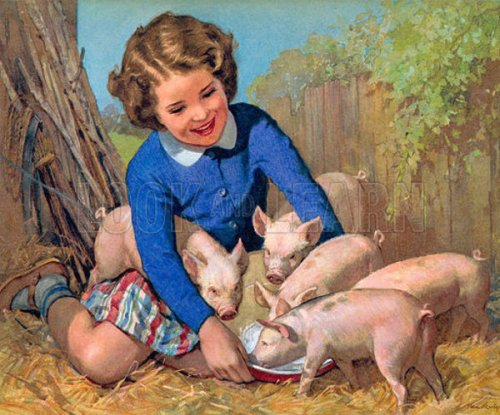 Little Girl With Pigs